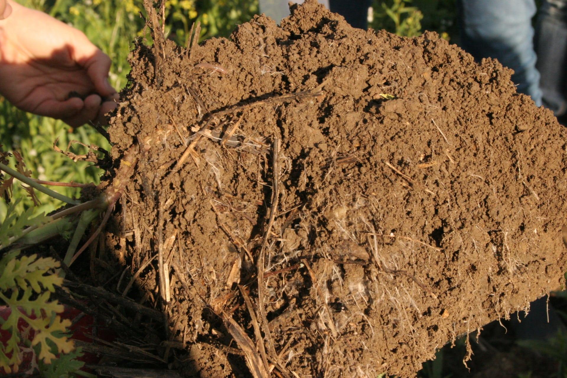 Humoser Boden