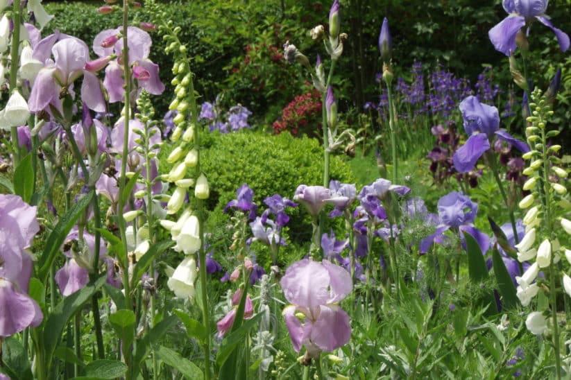 Frühlingsgarten mit Fingerhut
