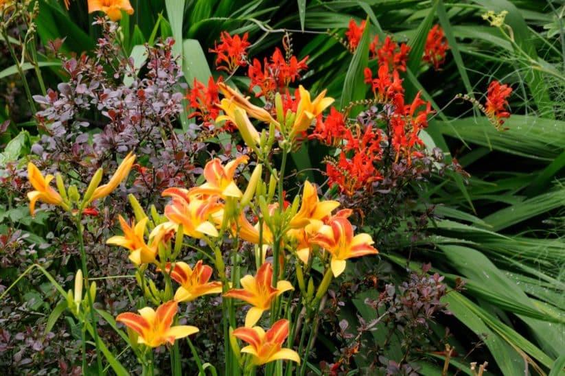 Orange Blumen im Garten