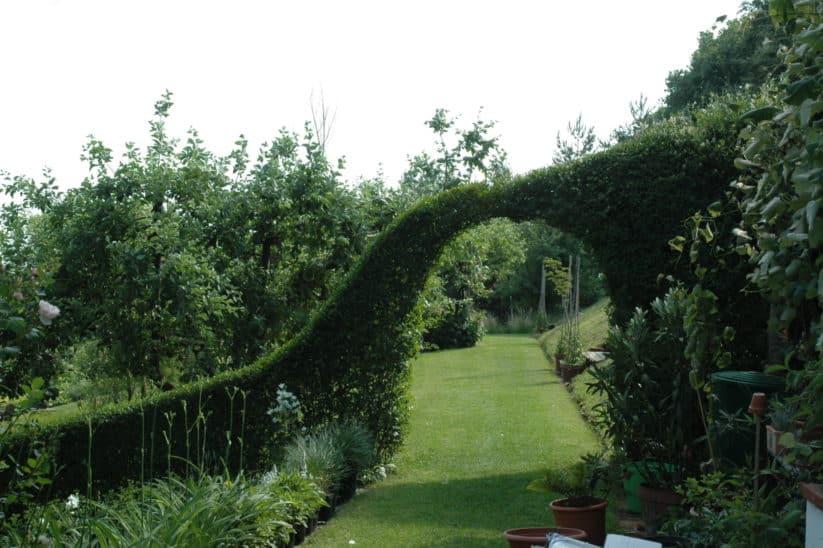 Ligusterbogen im Garten