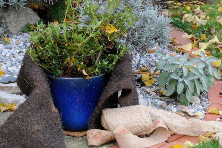 Topf-Pflanzen im Winter
