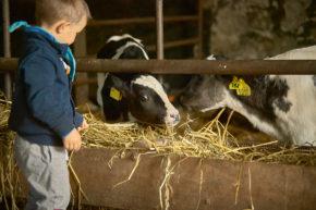 Kind Bauernhof
