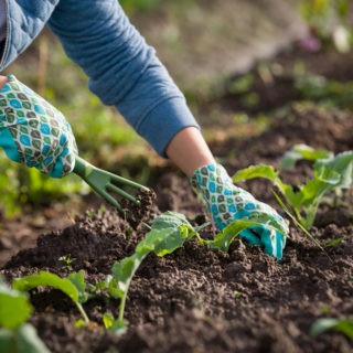 Gartengestaltung Gartenpraxis