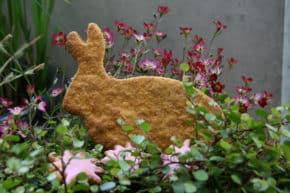 Möhren Dinkel Hase
