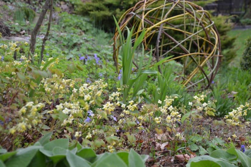 Garten im April