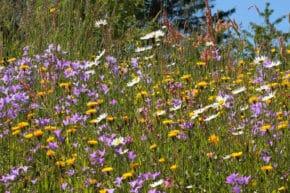Naturschutzbund Biodiversität Artenvielfalt