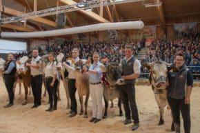 Kühe Rassen Rinderschau